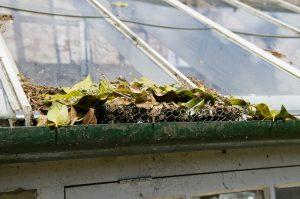 Fallen leaves clog the gutter of a garden greenhouse.